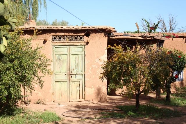 Saffron Gardens Ourika Valley Morocco Copyright Mandy Sinclair